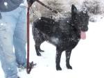 Black dog gone white